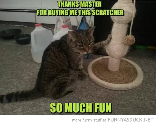 Ungrateful Cat