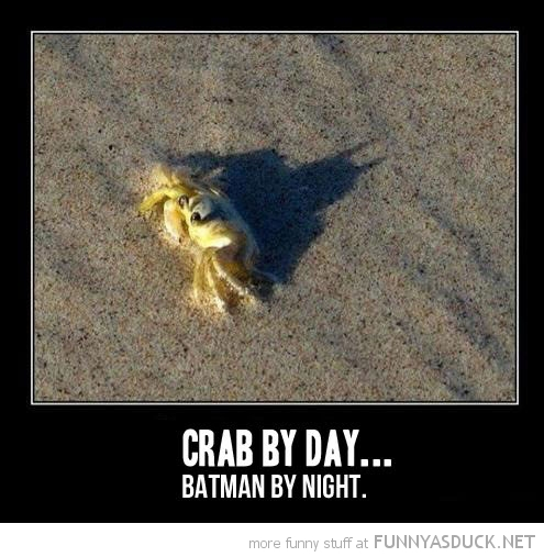 Crab By Day...