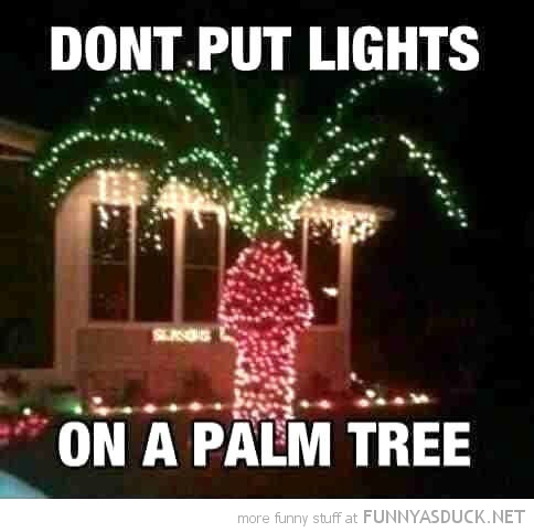 Lights On A Palm Tree