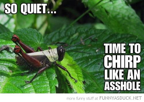 So Quiet...