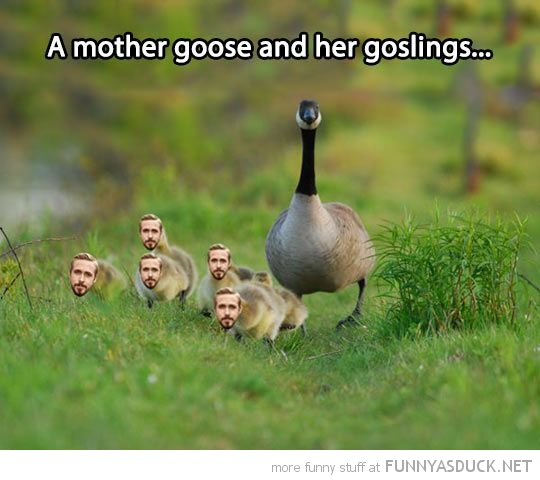Young Goslings