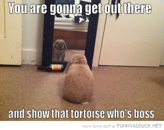 Motivated Hare