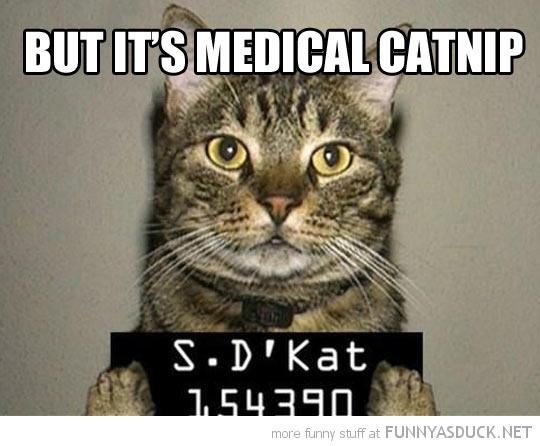 Jail Cat