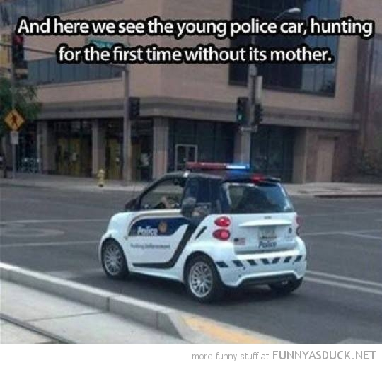 funny-pictures-police-smart-car-hunting-