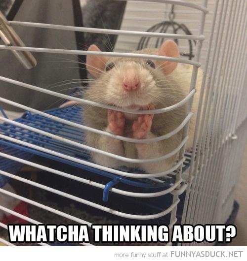 Seductive Rat