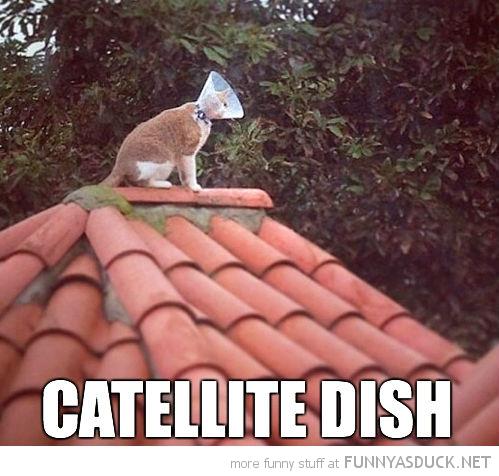 Catellite Dish