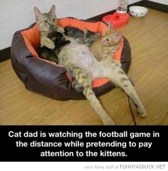 Dad Cat