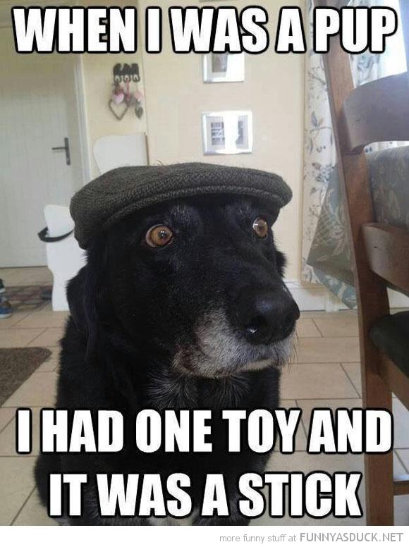 Pensioner Dog