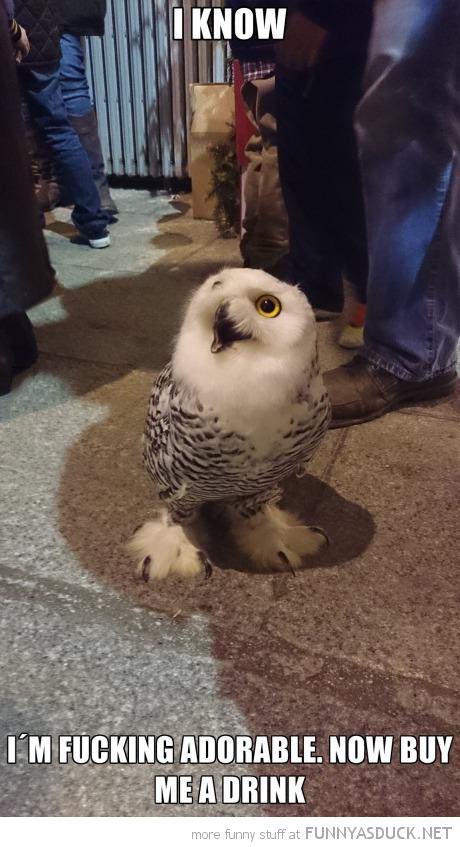 Nightlife Owl