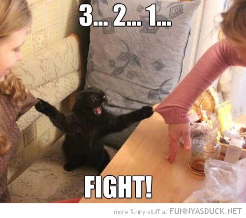 Referee Kitty