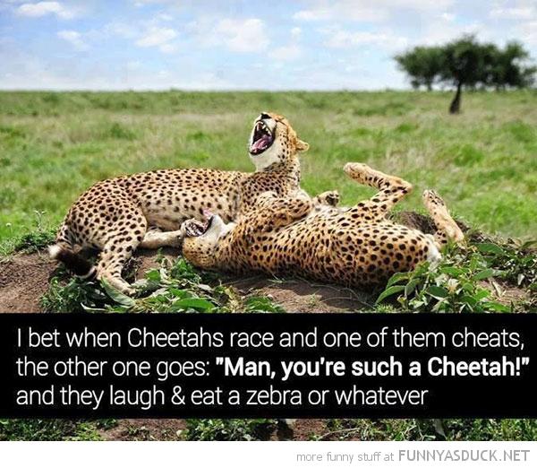 Such A Cheetah