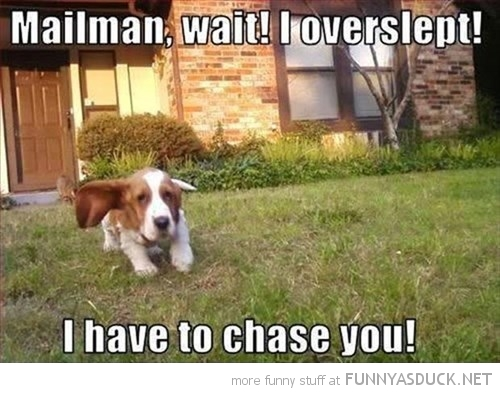 Mailman, Wait!