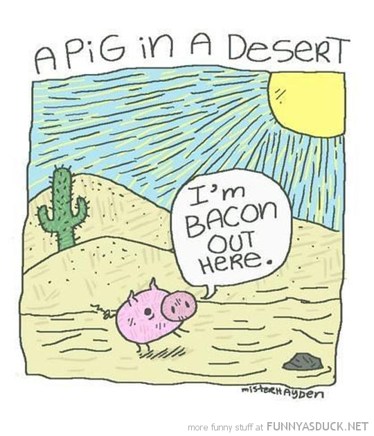 A Pig In The Desert
