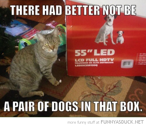 Dogs In The Box