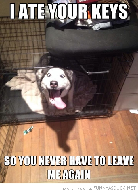 Overly Attached Dog