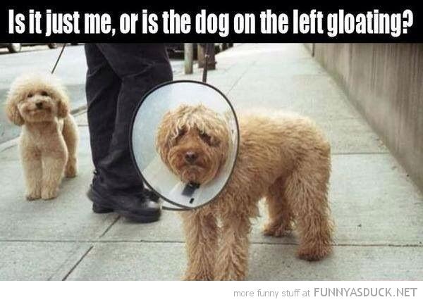 Gloating Dog