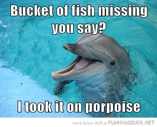 Punny Dolphin