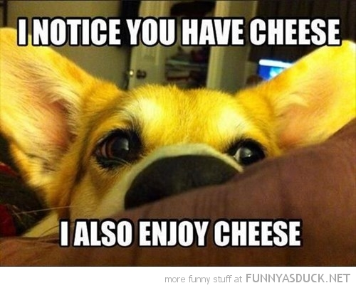 You Have Cheese?
