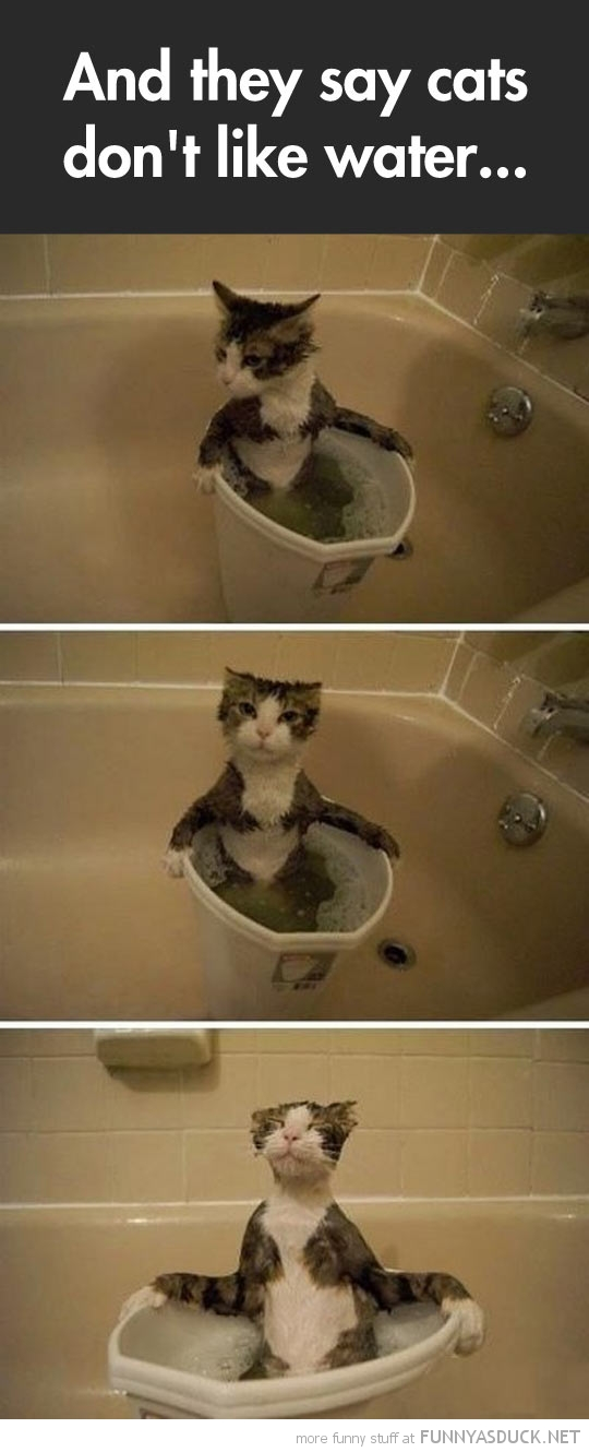 Cats Don't Like Water?