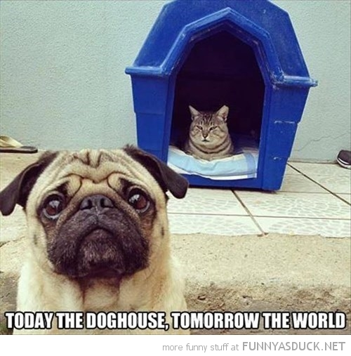 Today The Doghouse