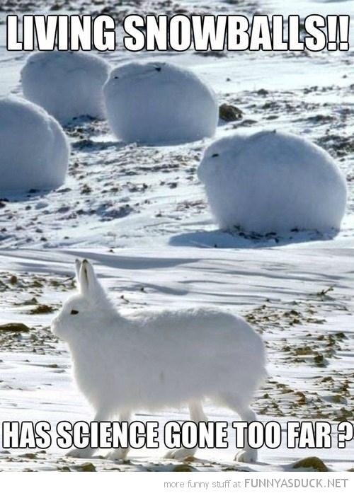 Living Snowballs
