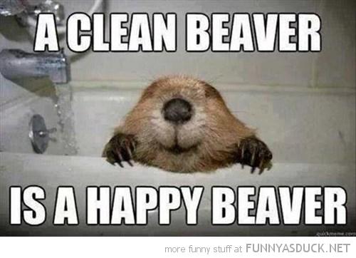 A Clean Beaver