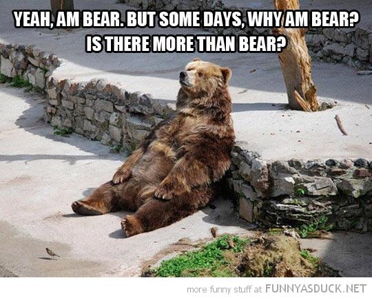 Contemplating Bear