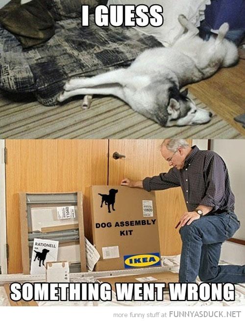 Dog Assembly Kit