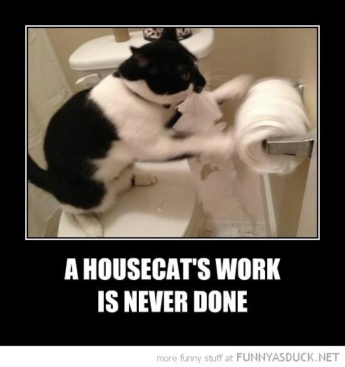 A Housecat's Work