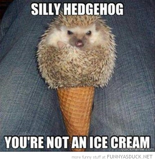 Silly Hedgehog