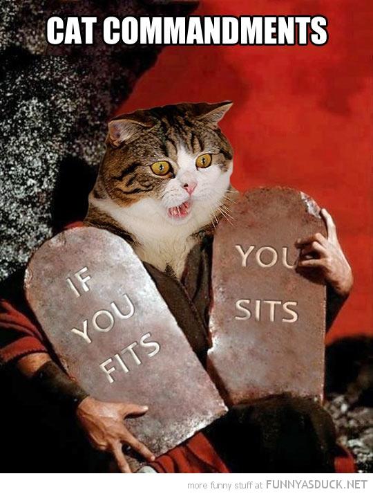 Cat Commandments