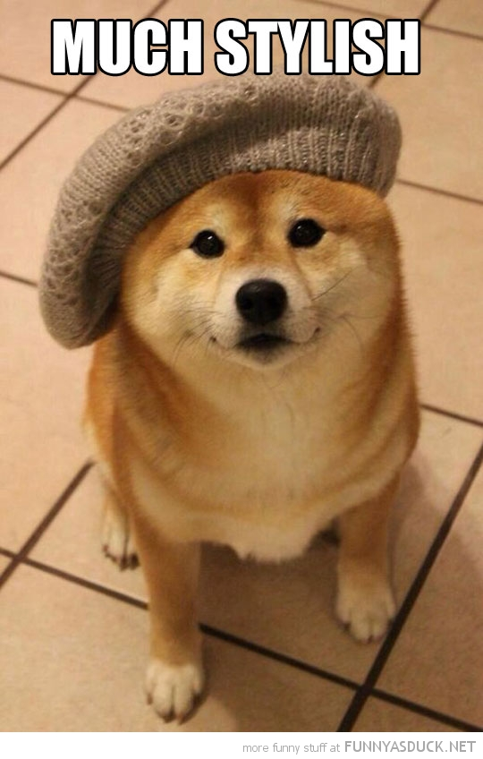 Stylish Doge