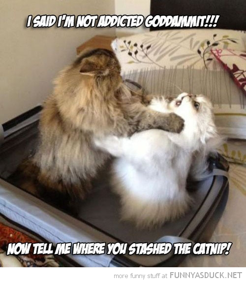 Catnip Addiction