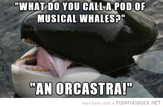 Punny Whale