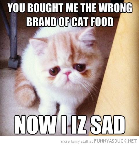 Wrong Cat Food