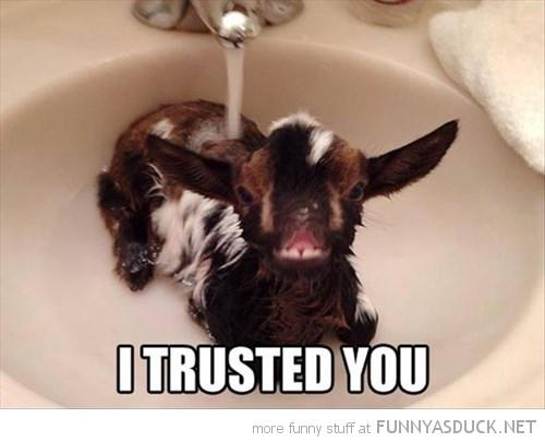 I Trusted You!