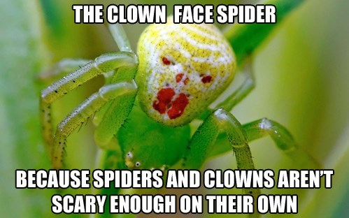 The Clown Face Spider