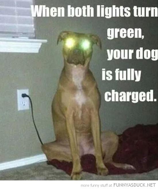 Dog Charging