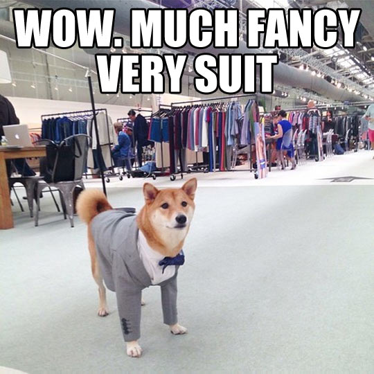 Fancy Doge