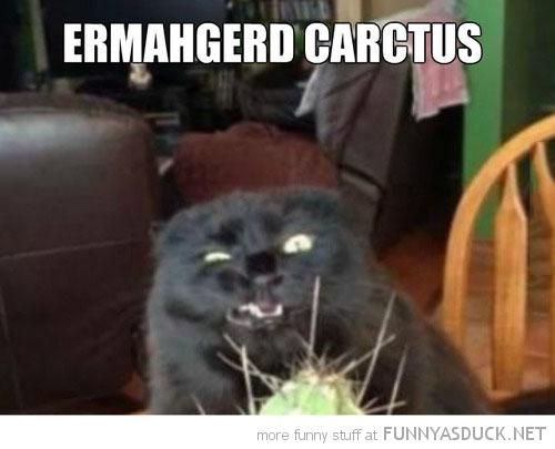 Ermahgerd Carctus