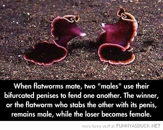 Flatworm Breeding