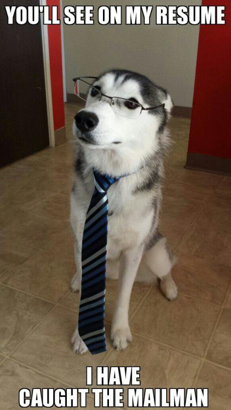 Interview Dog