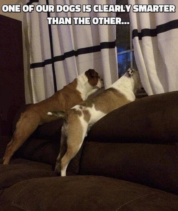 One Dog Smarter
