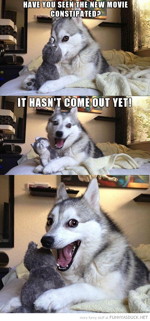 More Pun Dog