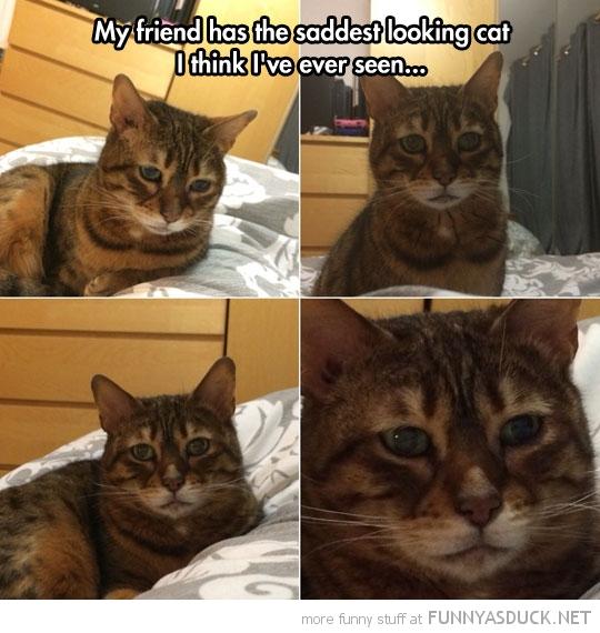 The Saddest Looking Cat