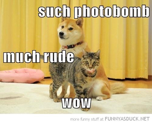 Doge Photobombed