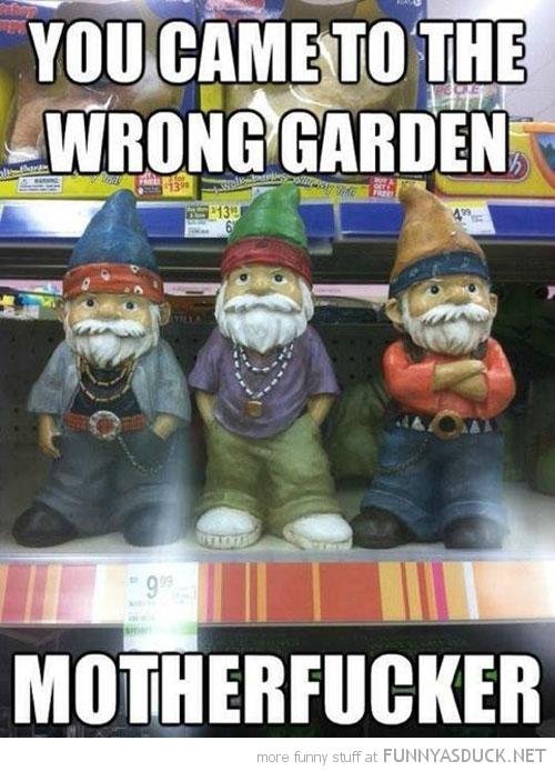 Swag Gnomes