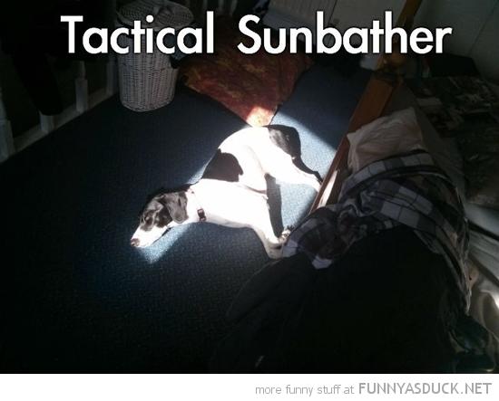 Tactical Sunbather