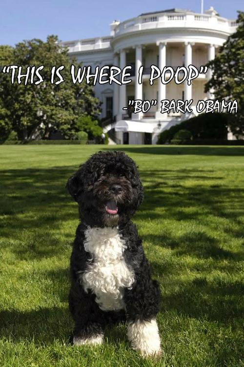 Bark Obama