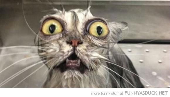 20 Cats Having A Bath (Click For Full Post)